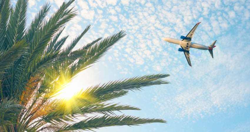 a plane flies over the fronds of a palm tree on a clear sunny day