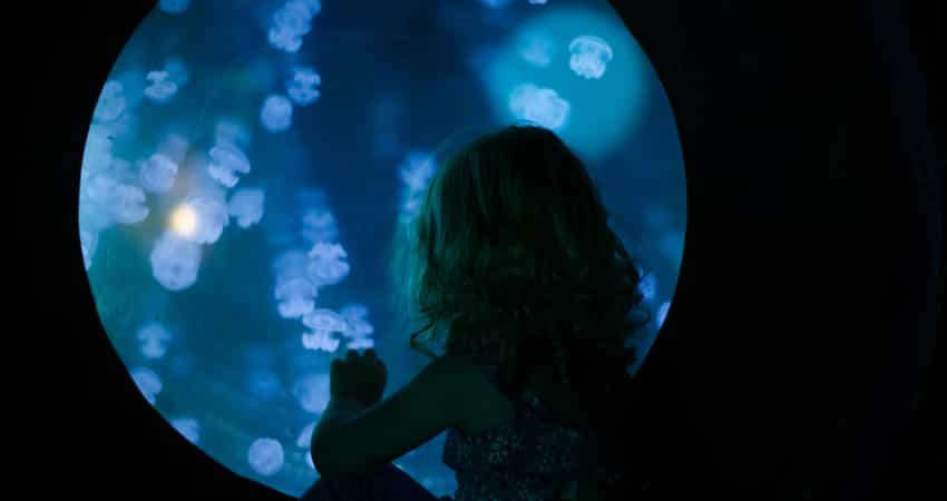 A young child looking into a jellyfish tank at an aquarium
