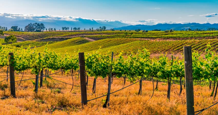 Vineyards grow on the rolling hills of Temecula Valley
